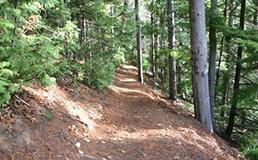 Howe Creek walk